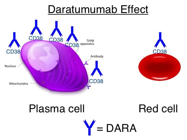 010: Daratumumab Effect with Rick Kaufman