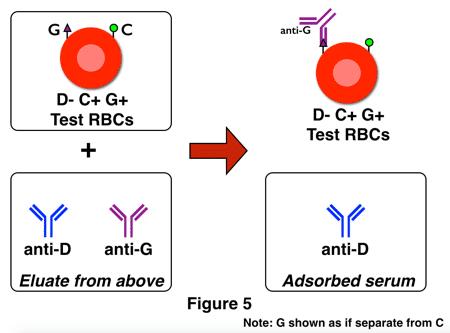 G differentiation 2