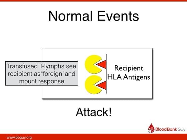 Normal response after transfusion (1)