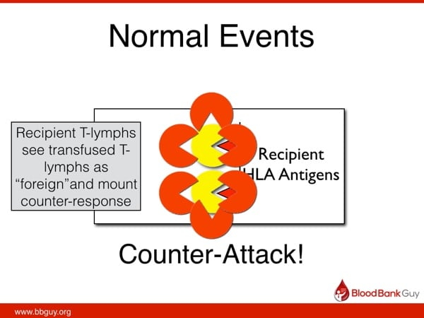 Normal response after transfusion (2)