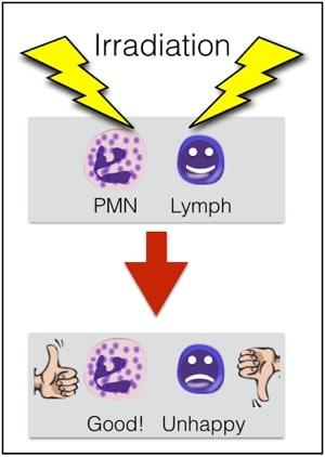 The Essentials: Granulocytes - Blood Bank Guy