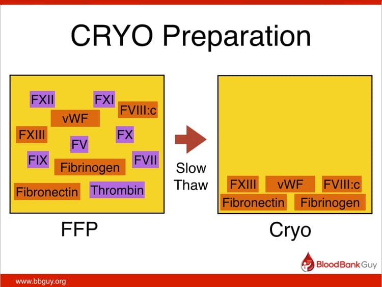 Cryo slide 3 - Five components of FFP insoluble at 1-6 C