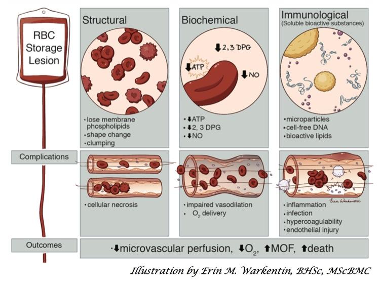 Heddle Slide 1: Blood Storage Lesion