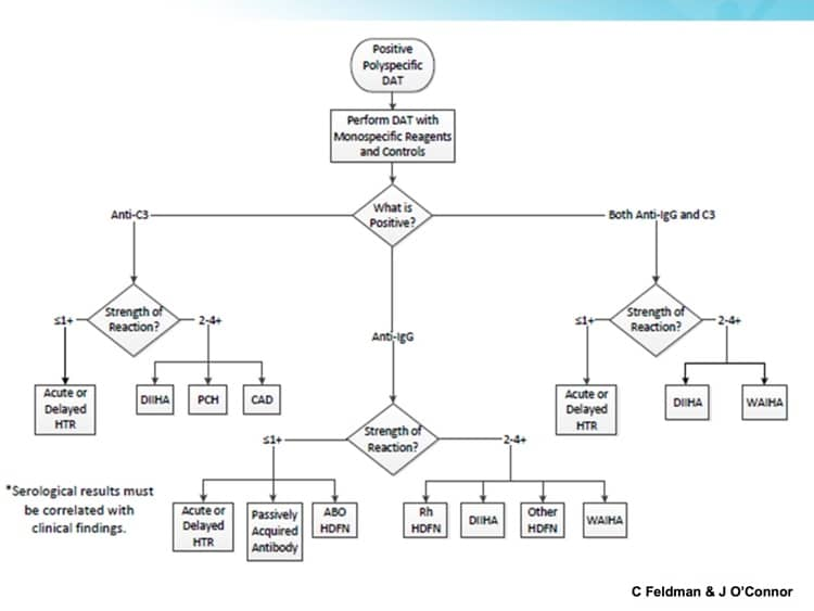 Johnson Slide 12 - AMAZING flowchart for DAT evaluation!