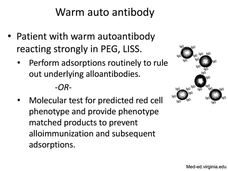 Delaney Slide 11 - Warm autoantibody workup options