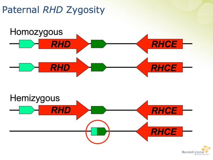 Denomme Slide 6 - Paternal RhD zygosity testing examples