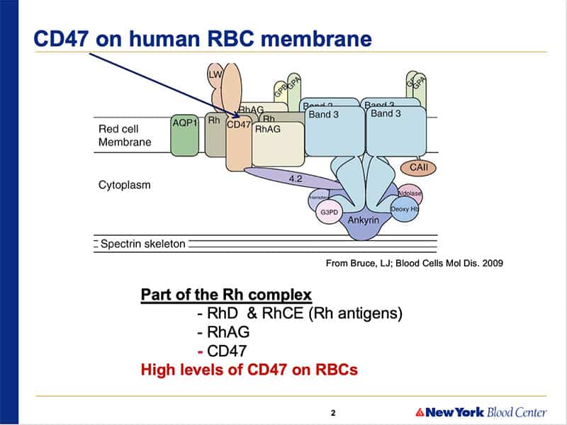 Slide 1 - Structure of CD47 (note relation to Rh proteins)