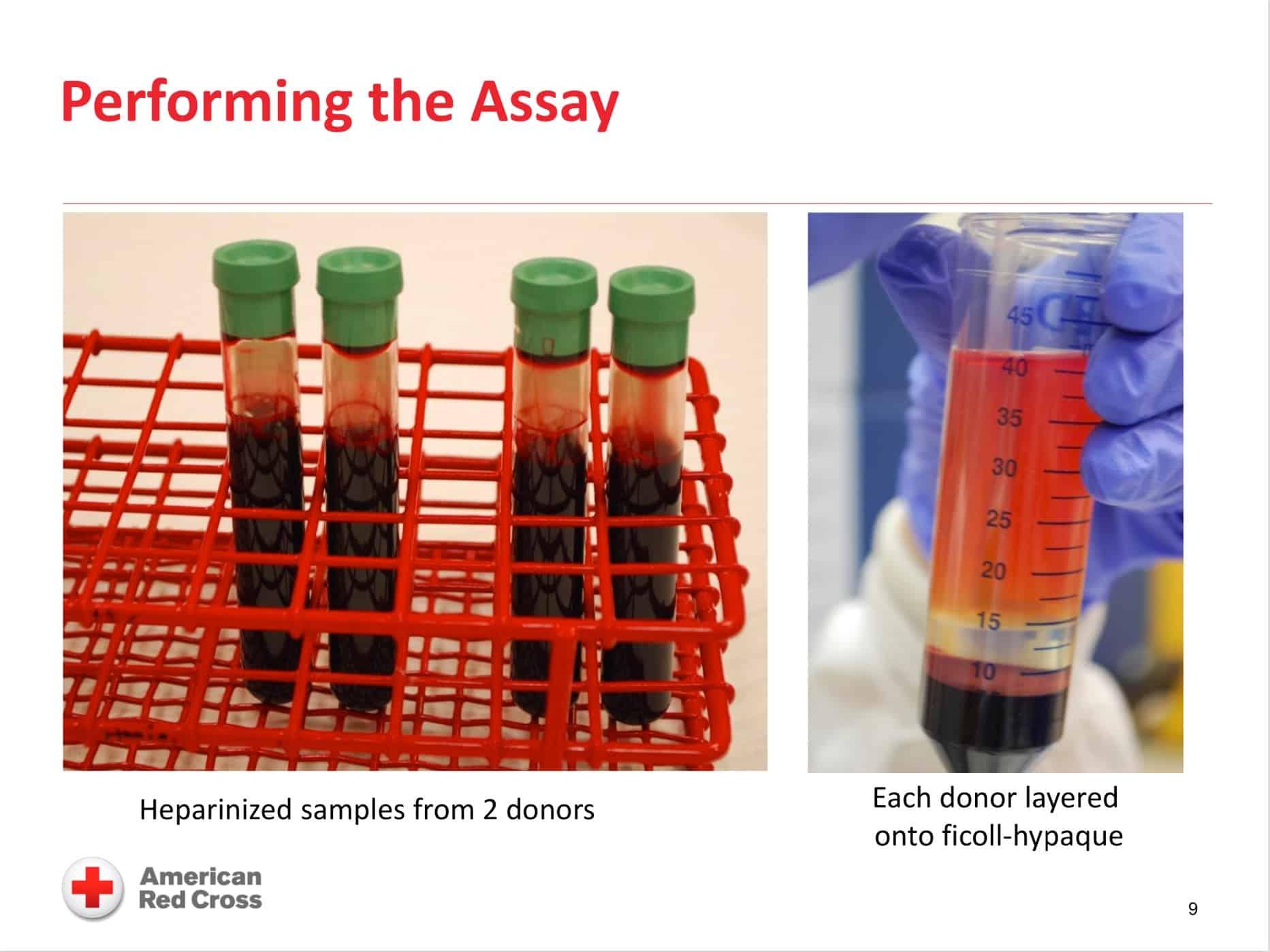 Monocyte monolayer assay image 1
