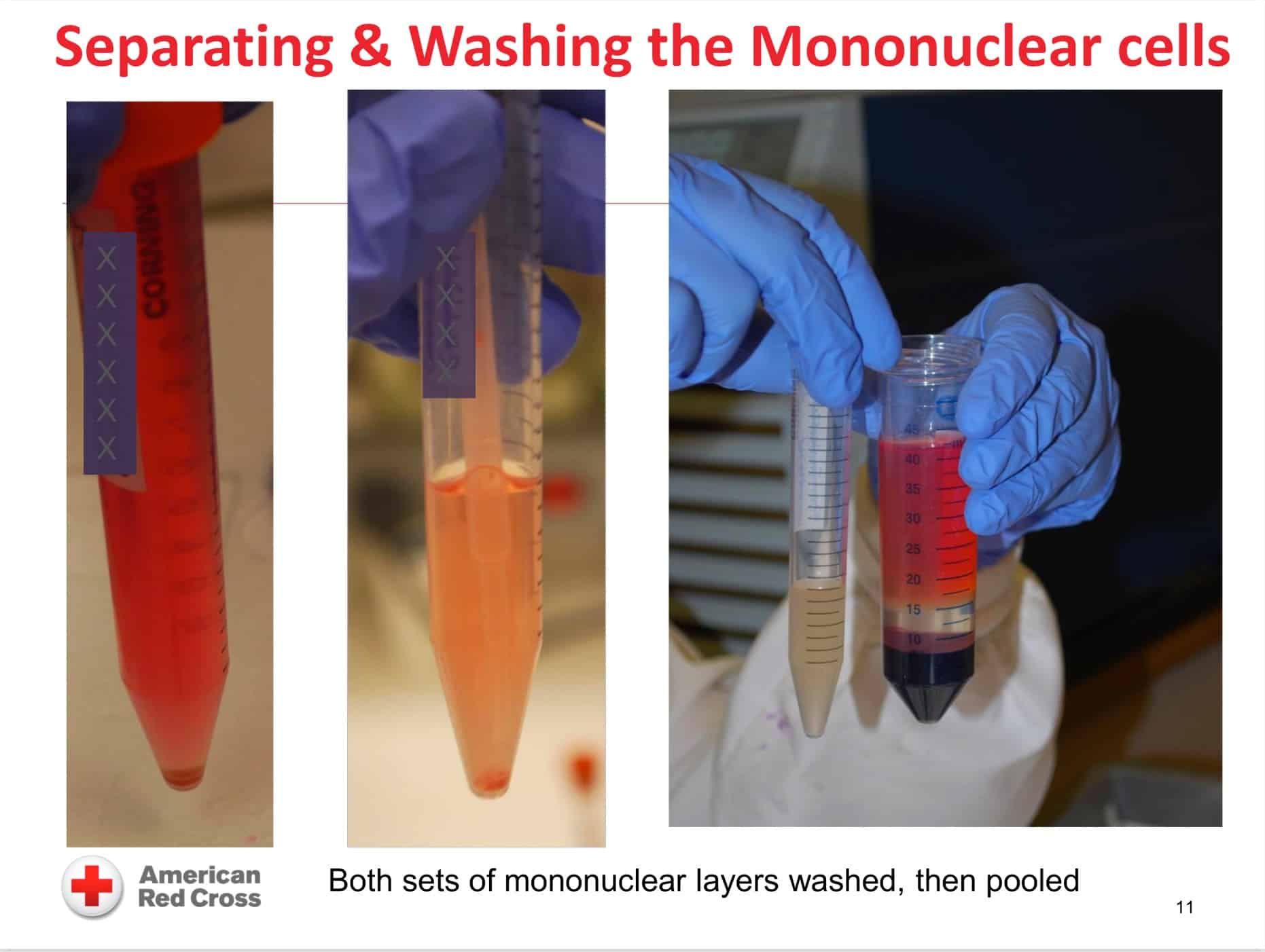 Monocyte monolayer assay image 2