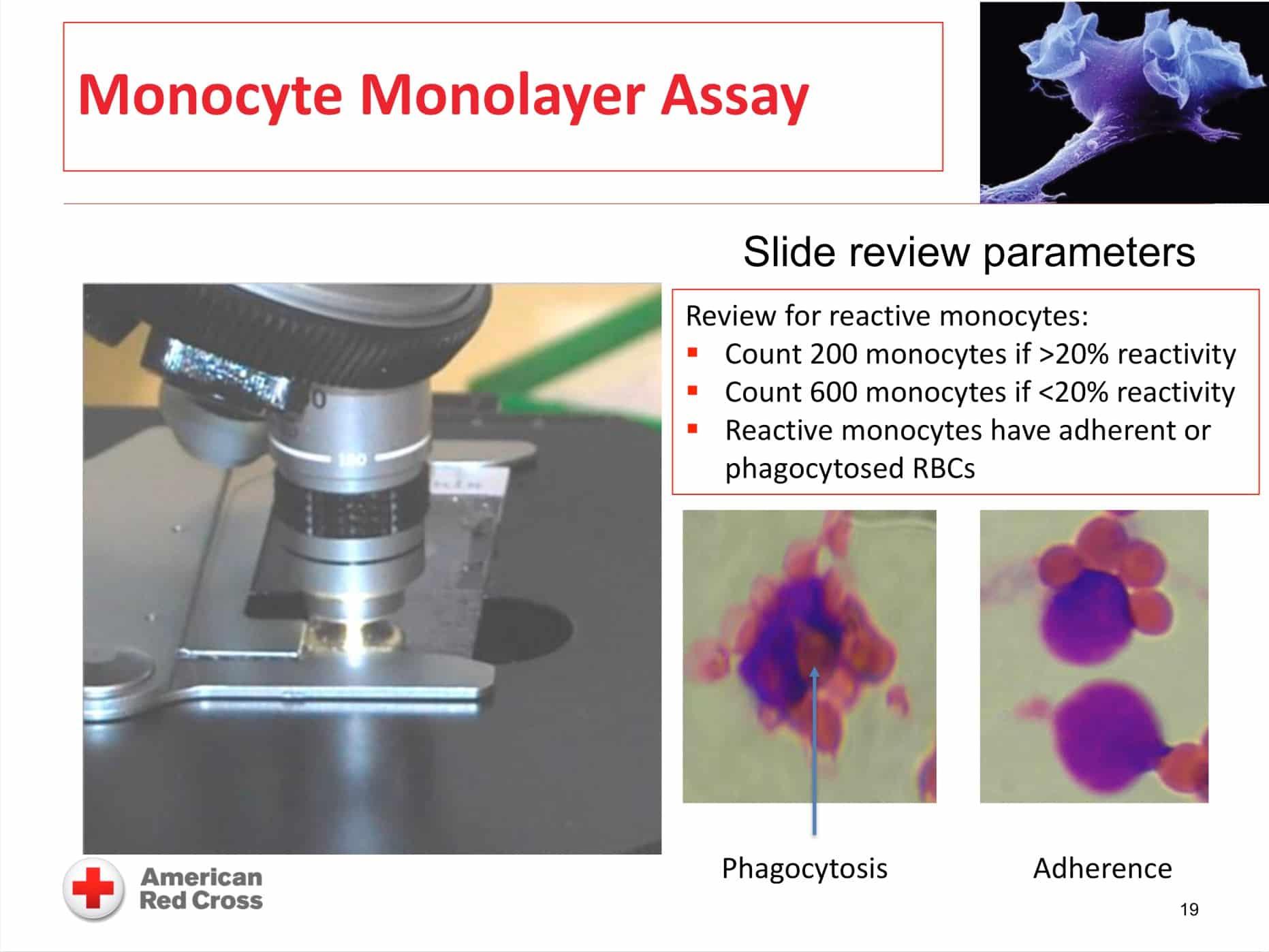 Monocyte monolayer assay image 6