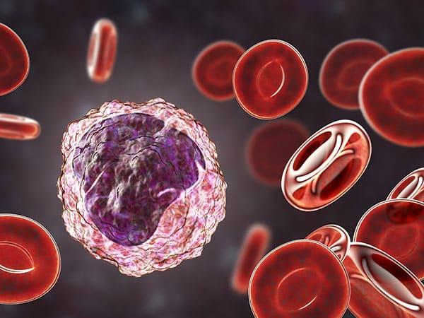 monocyte mononuclear assay